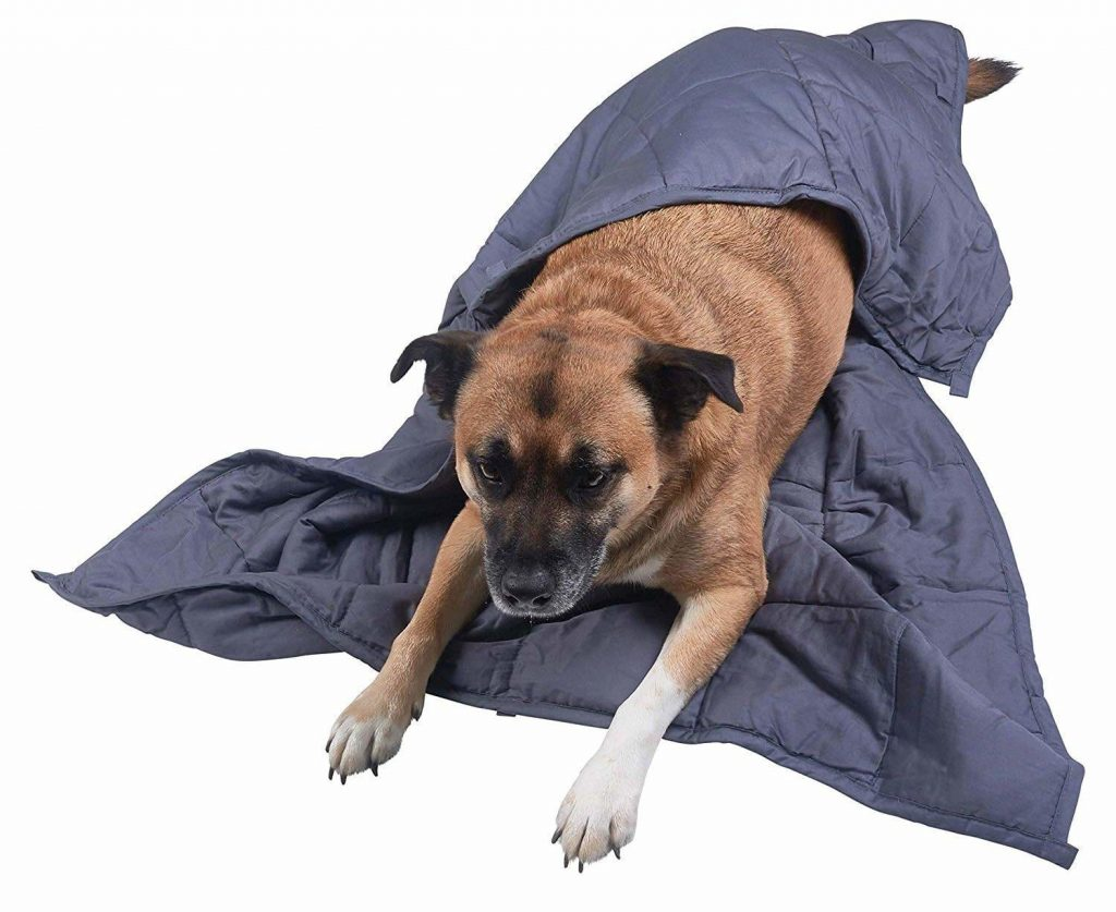 How weighted blankets are good for dogs