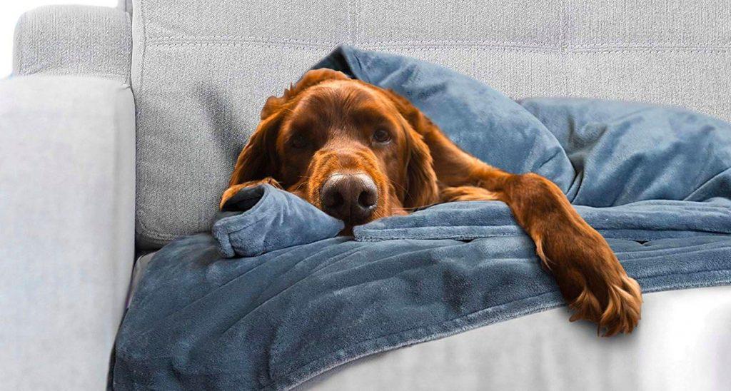 Improve dog health